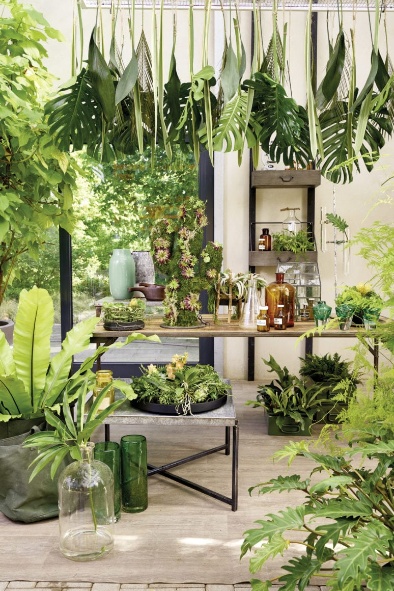 Exotic Jungle Feeling At Home