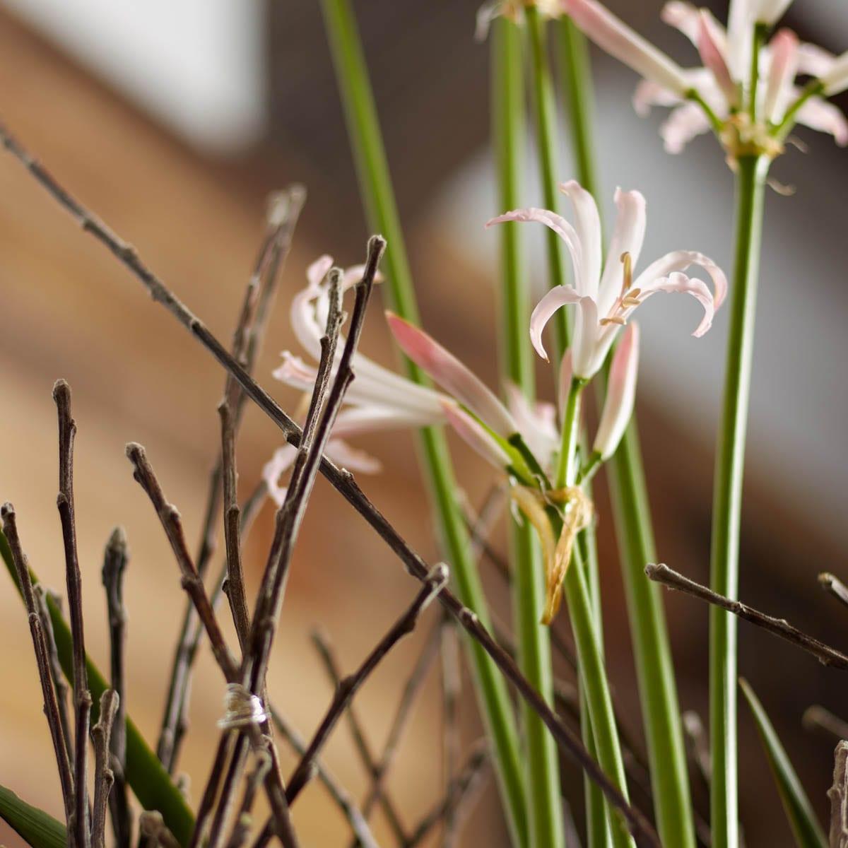 Floral Designs by Radko Chapov