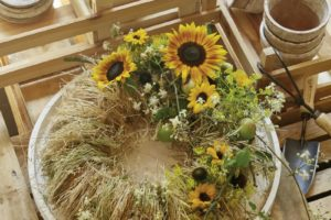 Sunflowers in Hay